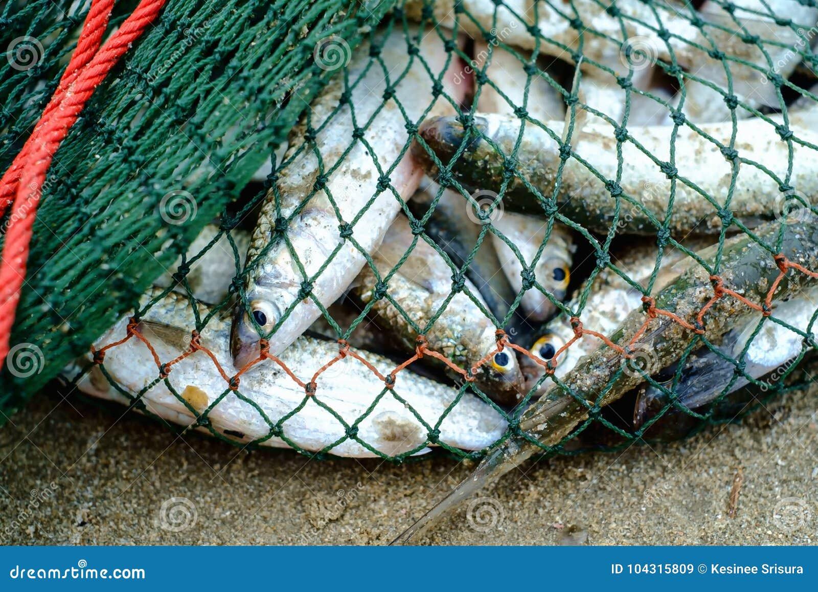 充分在捕鱼网的海鱼在沙滩