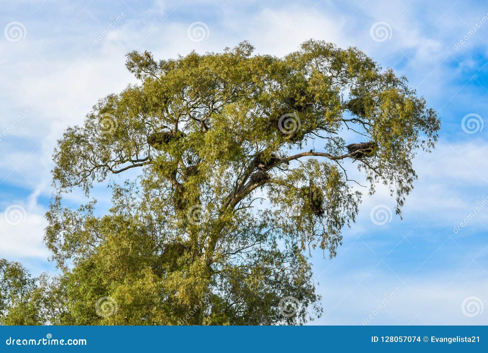 充分树鹳巢