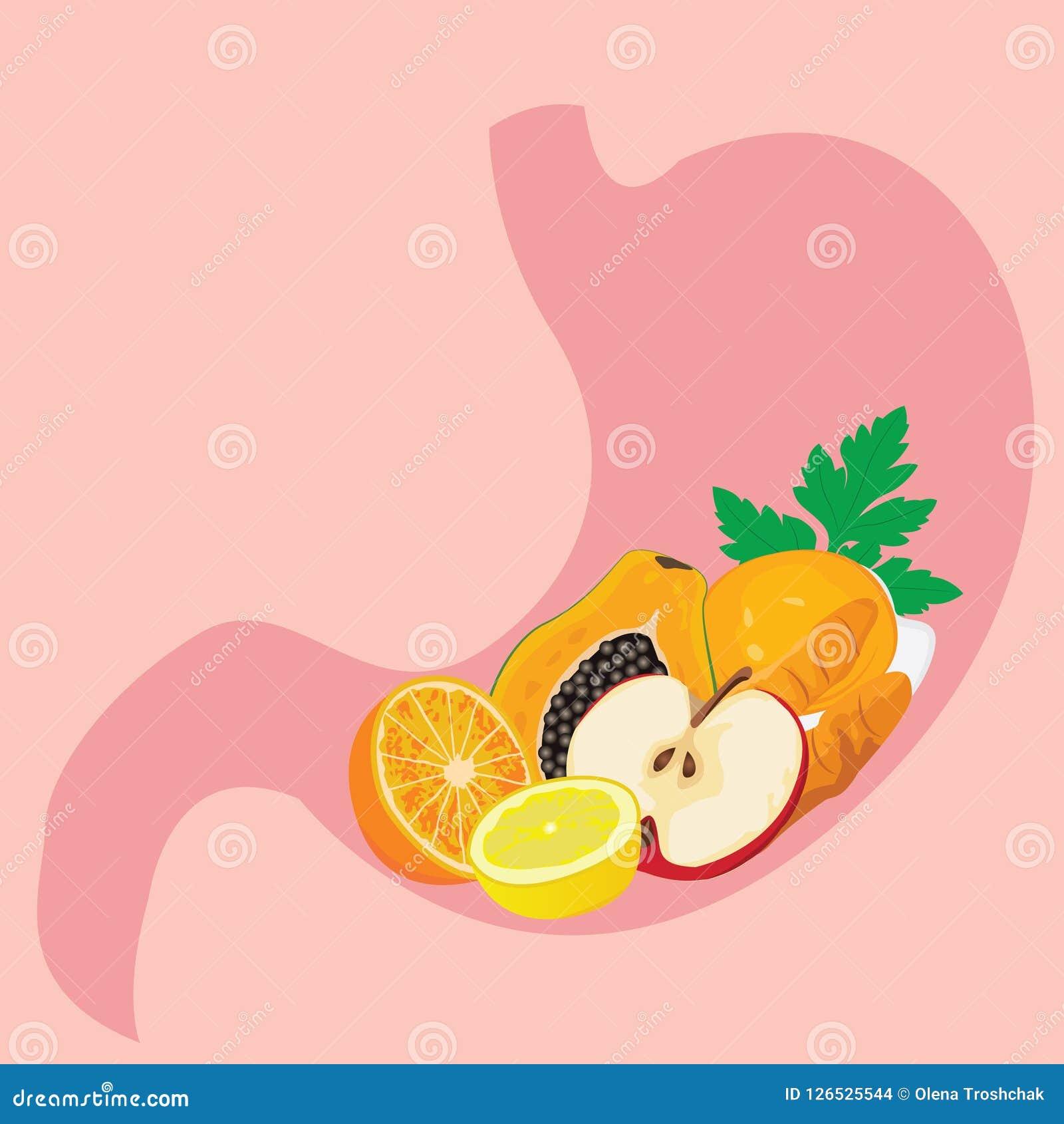 充分胃形状健康meel 健康消化概念