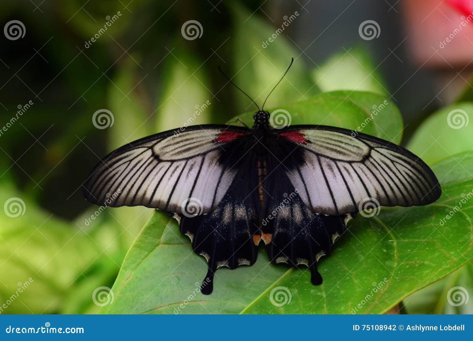 充满活力的蝴蝶