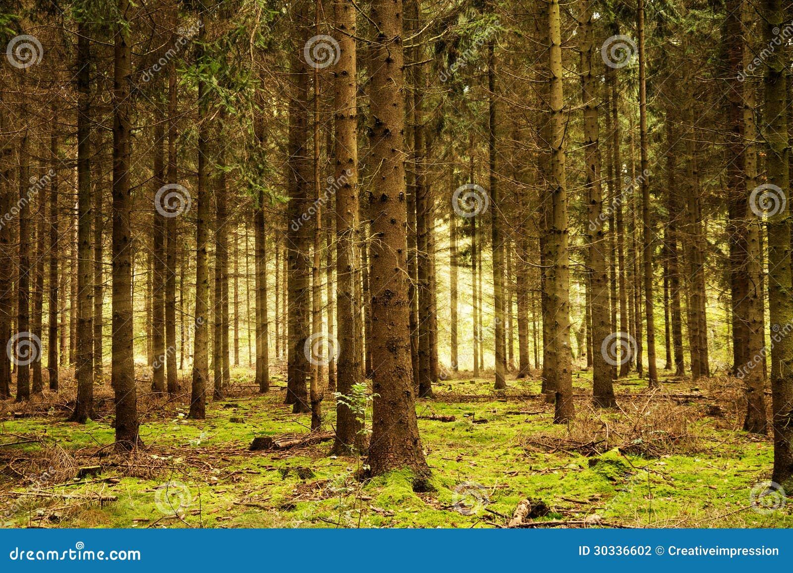 光束在森林里