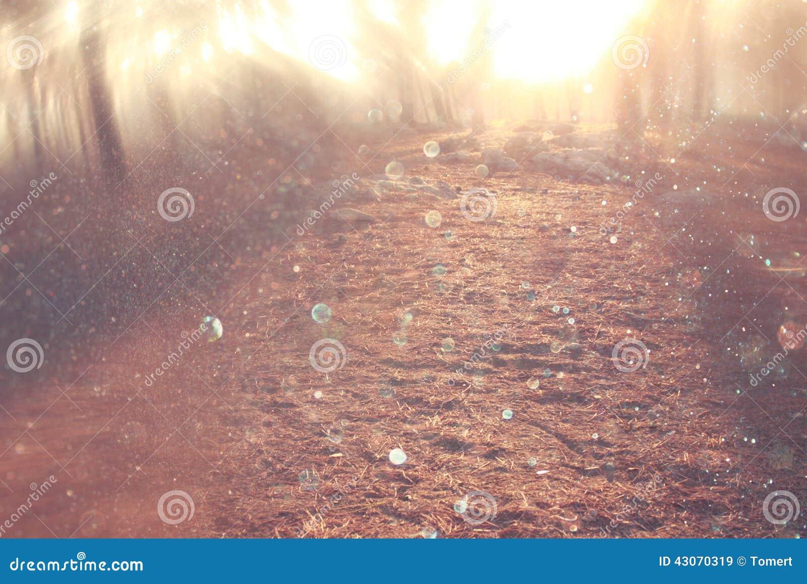光爆炸被弄脏的抽象照片在树和闪烁bokeh中的点燃