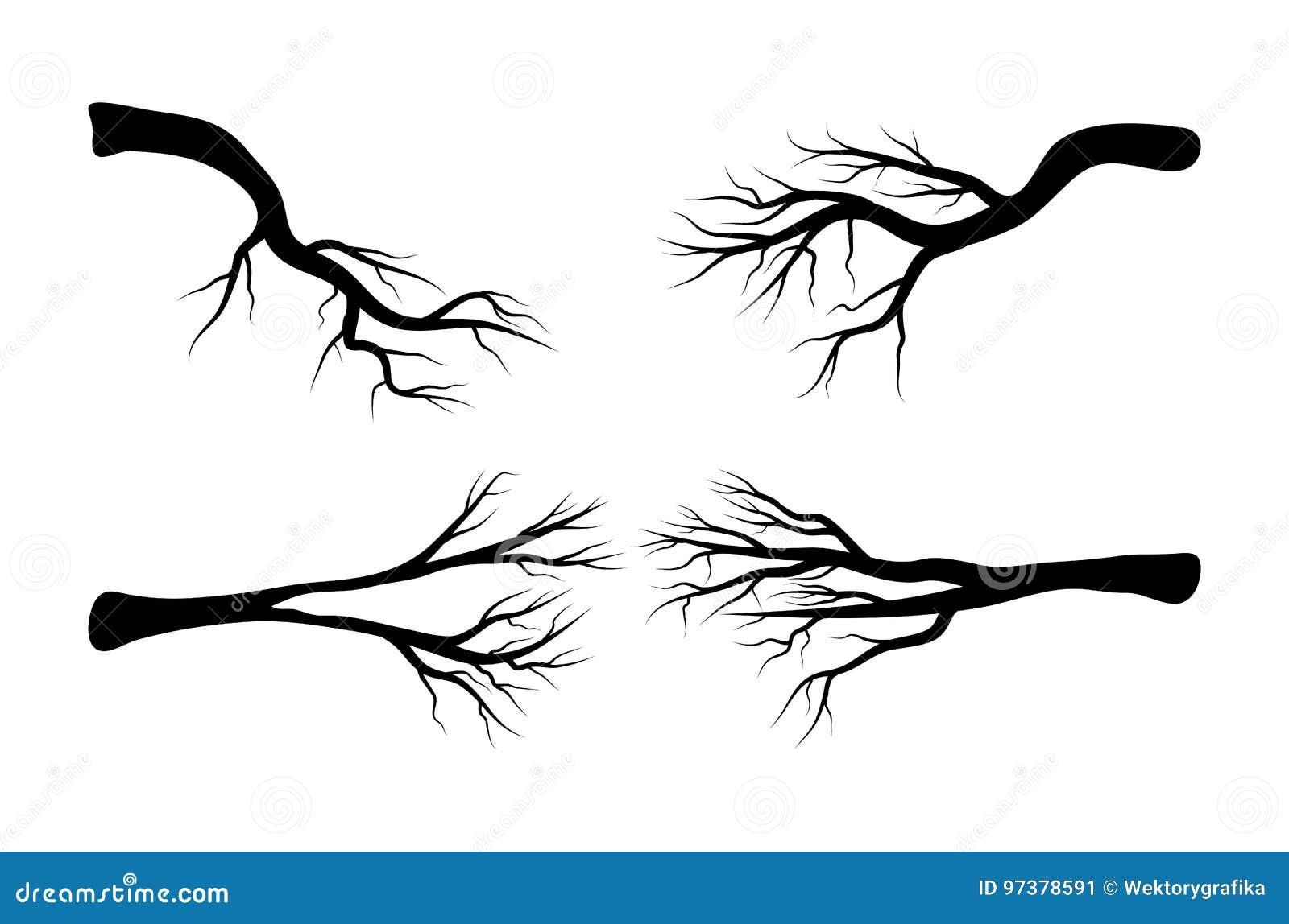 光秃的分支集合传染媒介标志象设计 美丽的illustratio