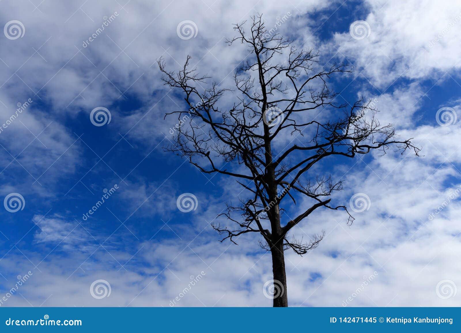 光秃的树,不生叶的树,它在最后冬天季节的