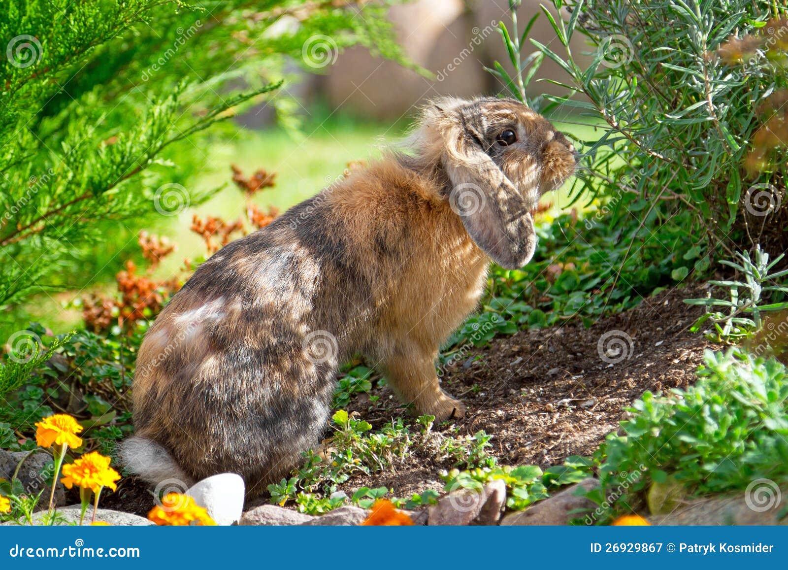 兔子在庭院里