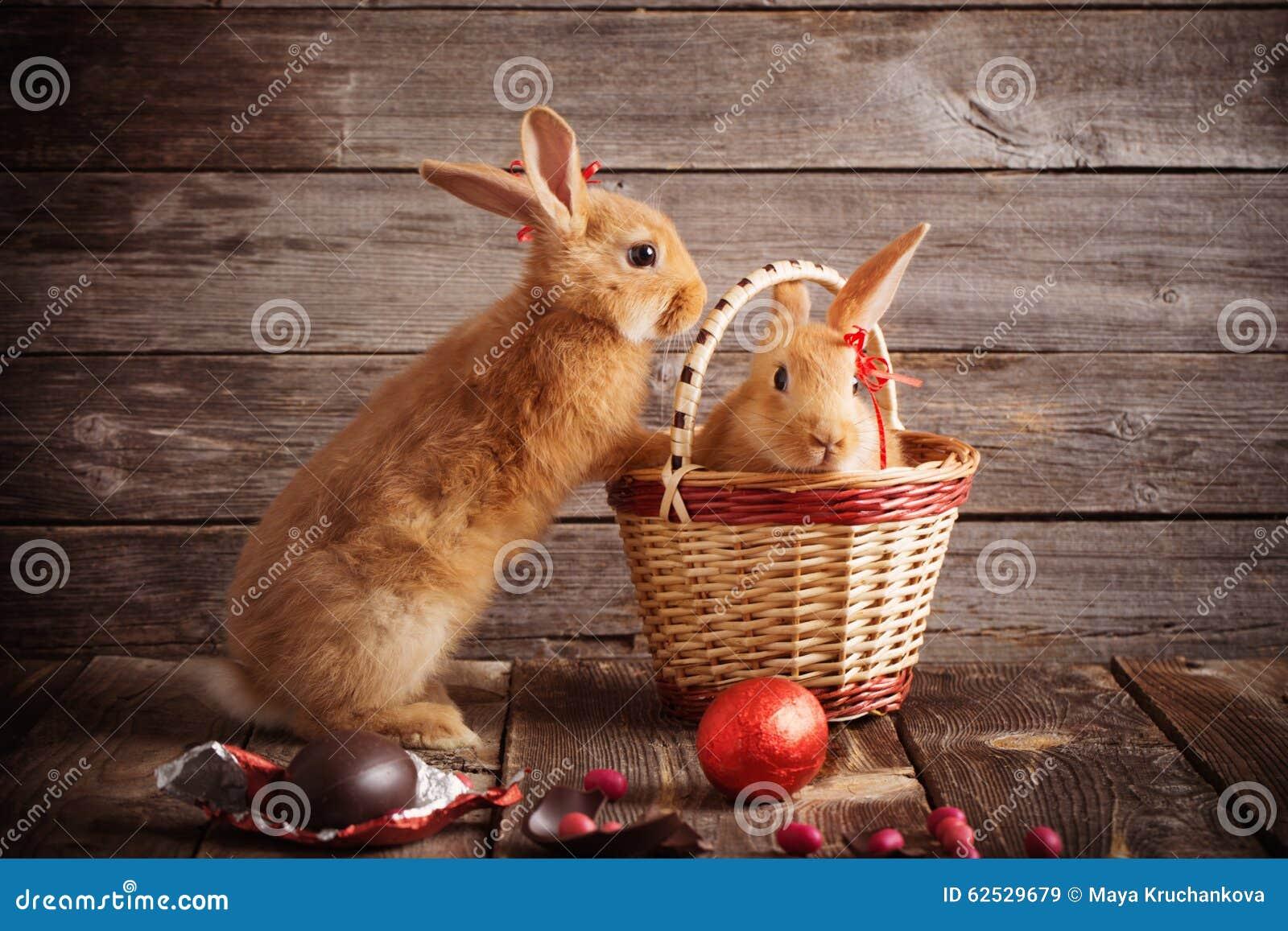 兔子用在木背景的朱古力蛋