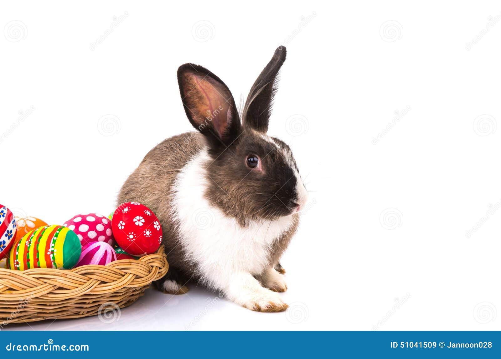 兔子用被隔绝的复活节彩蛋