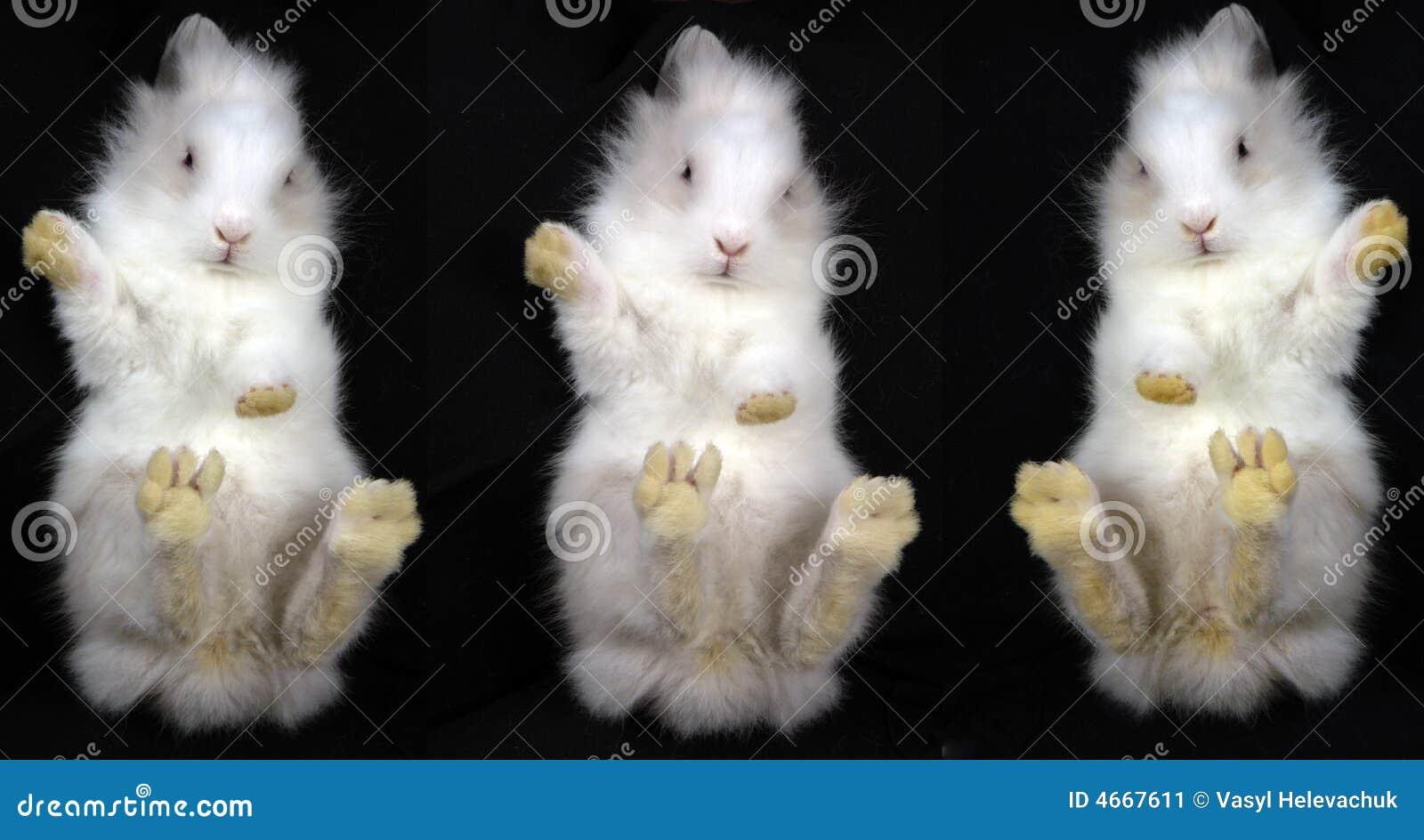 白色浴室兔子为什么喜欢躲在仓鼠里图片
