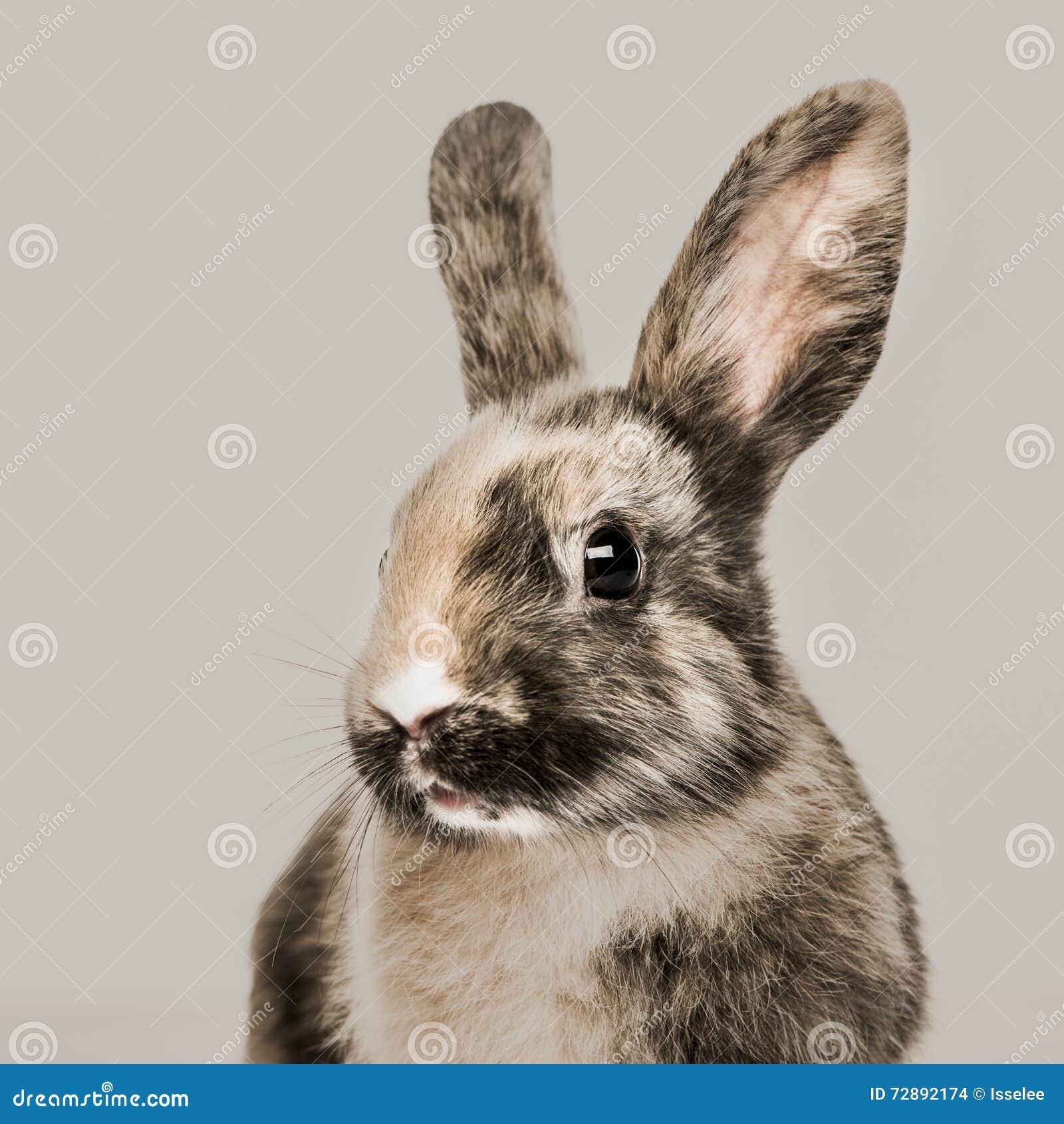 兔子的特写镜头
