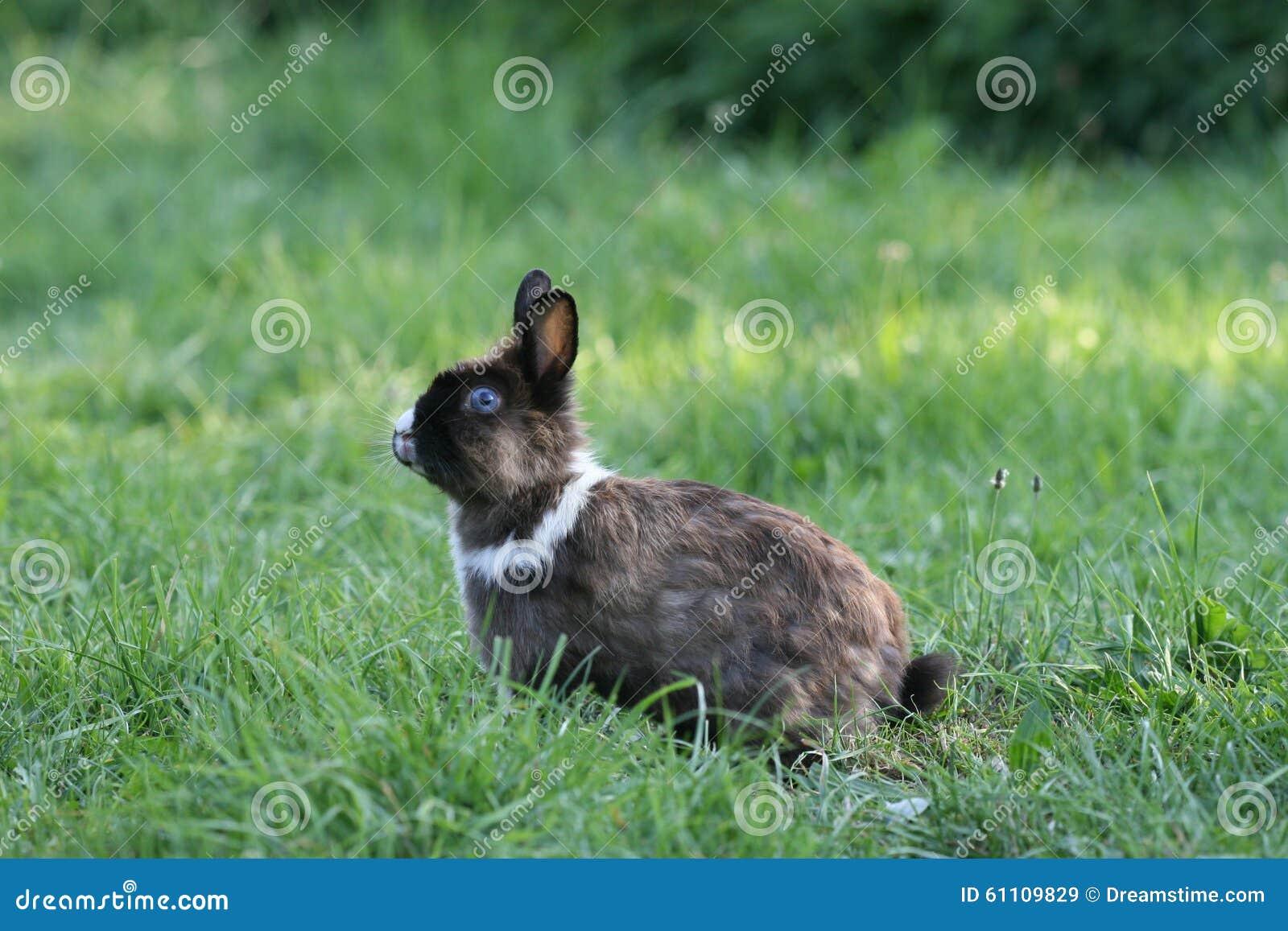 兔子驱花蚊子用什么好图片