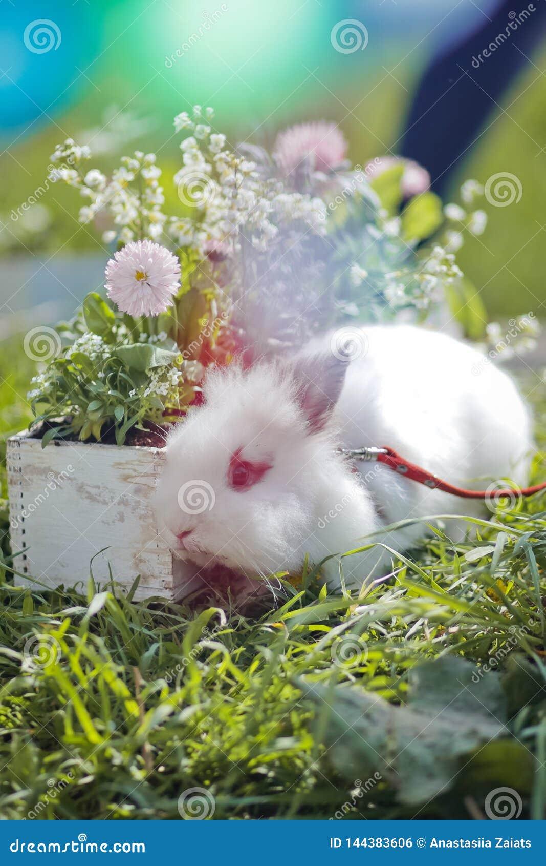 兔宝宝和复活节五颜六色的花在草在日落 E