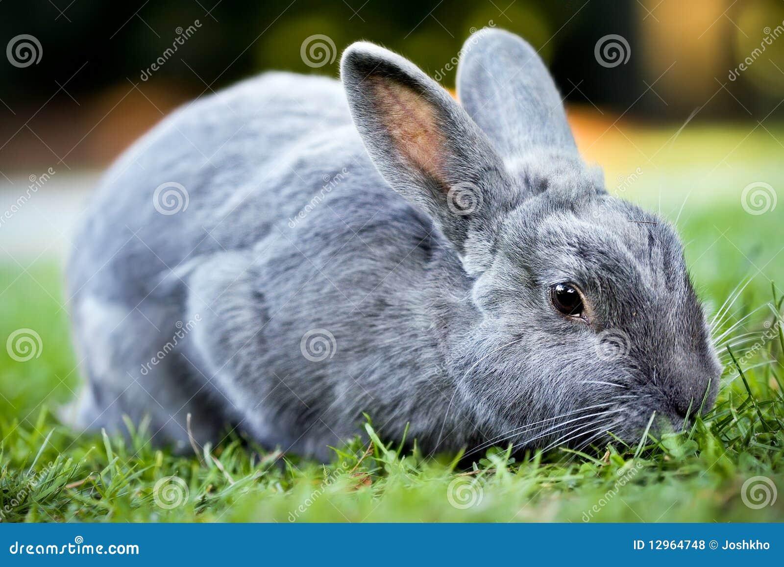 兔宝宝灰色兔子