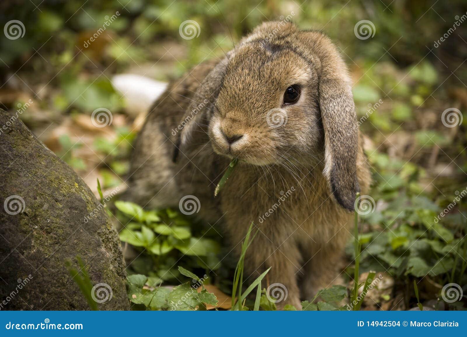 兔宝宝磁盘