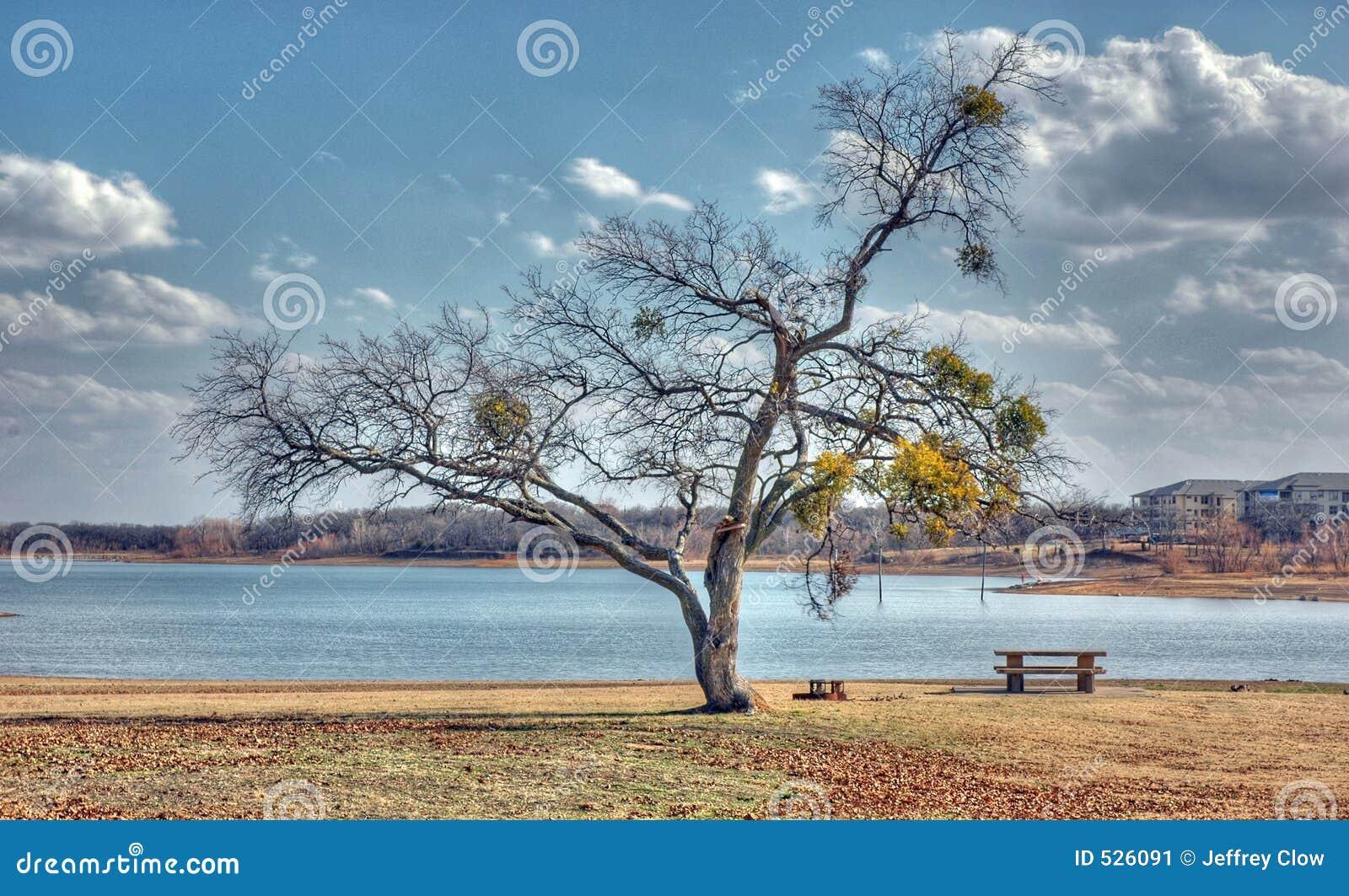 Download 公园冬天 库存图片. 图片 包括有 离开, 室外, 海岸线, 湖边, 野餐, 滚磨的, 季节, 观点, 公园 - 526091