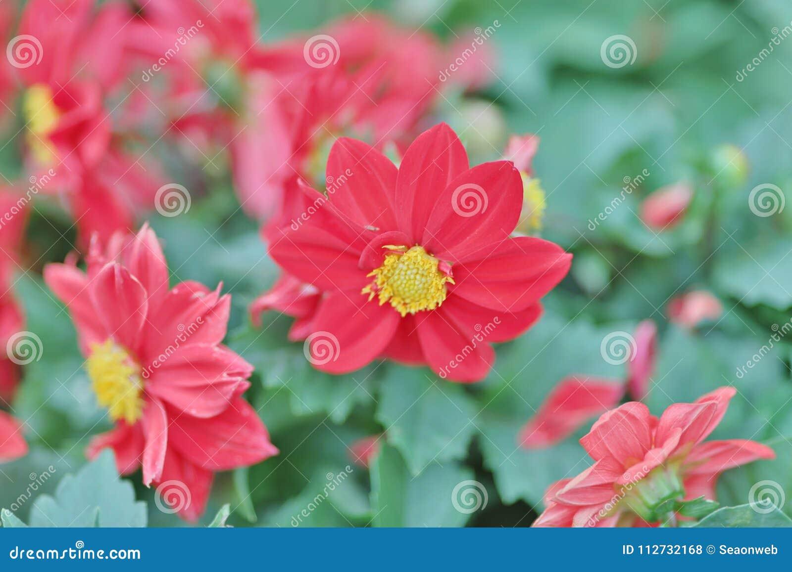 公园春天的开花的花圃