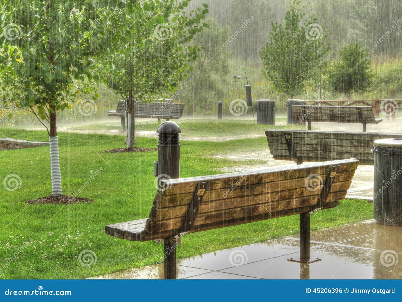 几张公园长椅在与树的一个雨天在场面.图片