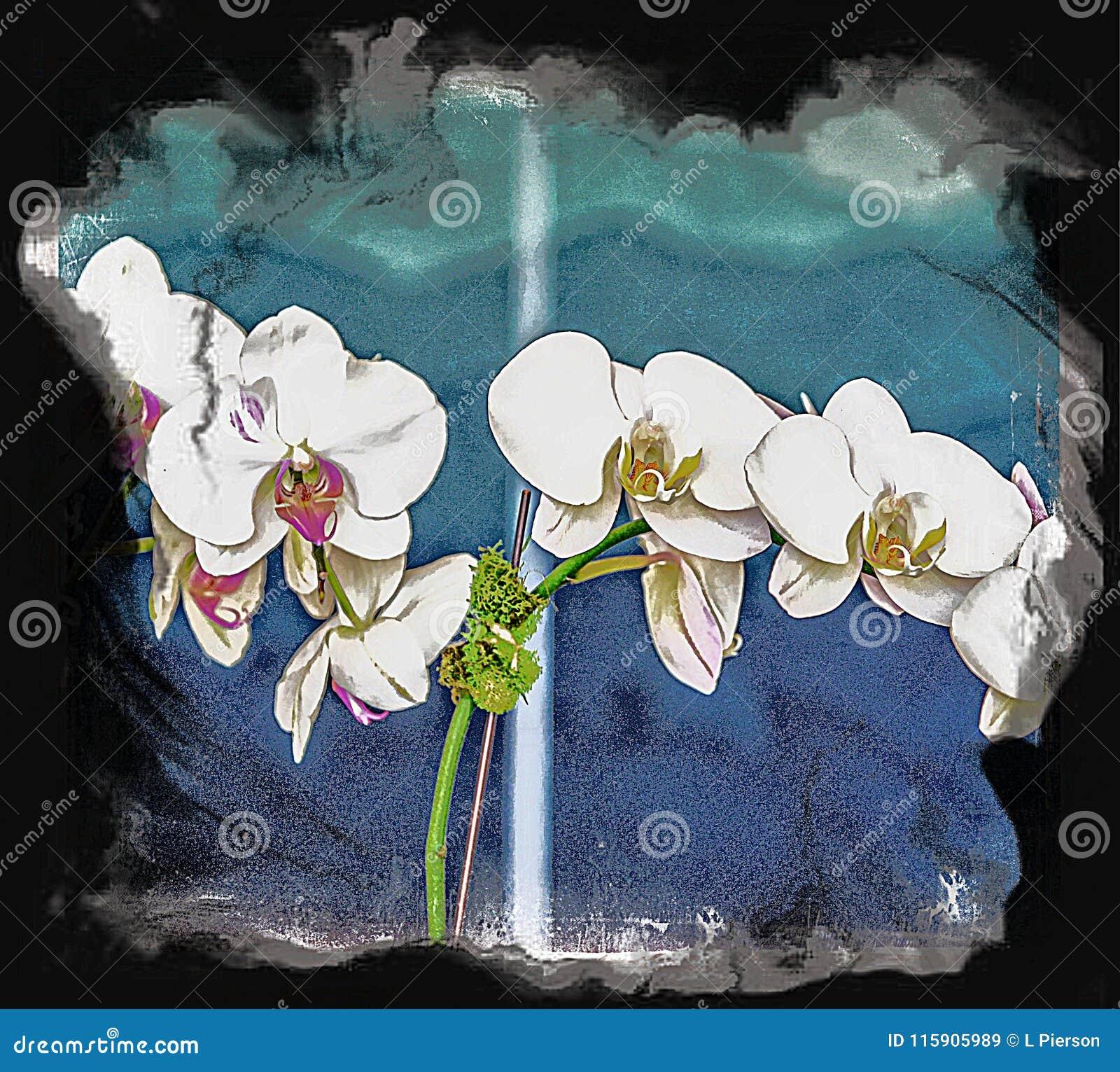 兰花是俏丽的作为一张图片在任何设置和在所有颜色