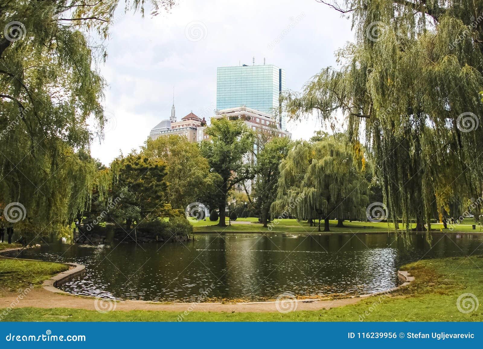 共同的波士顿和有美丽的湖的公园