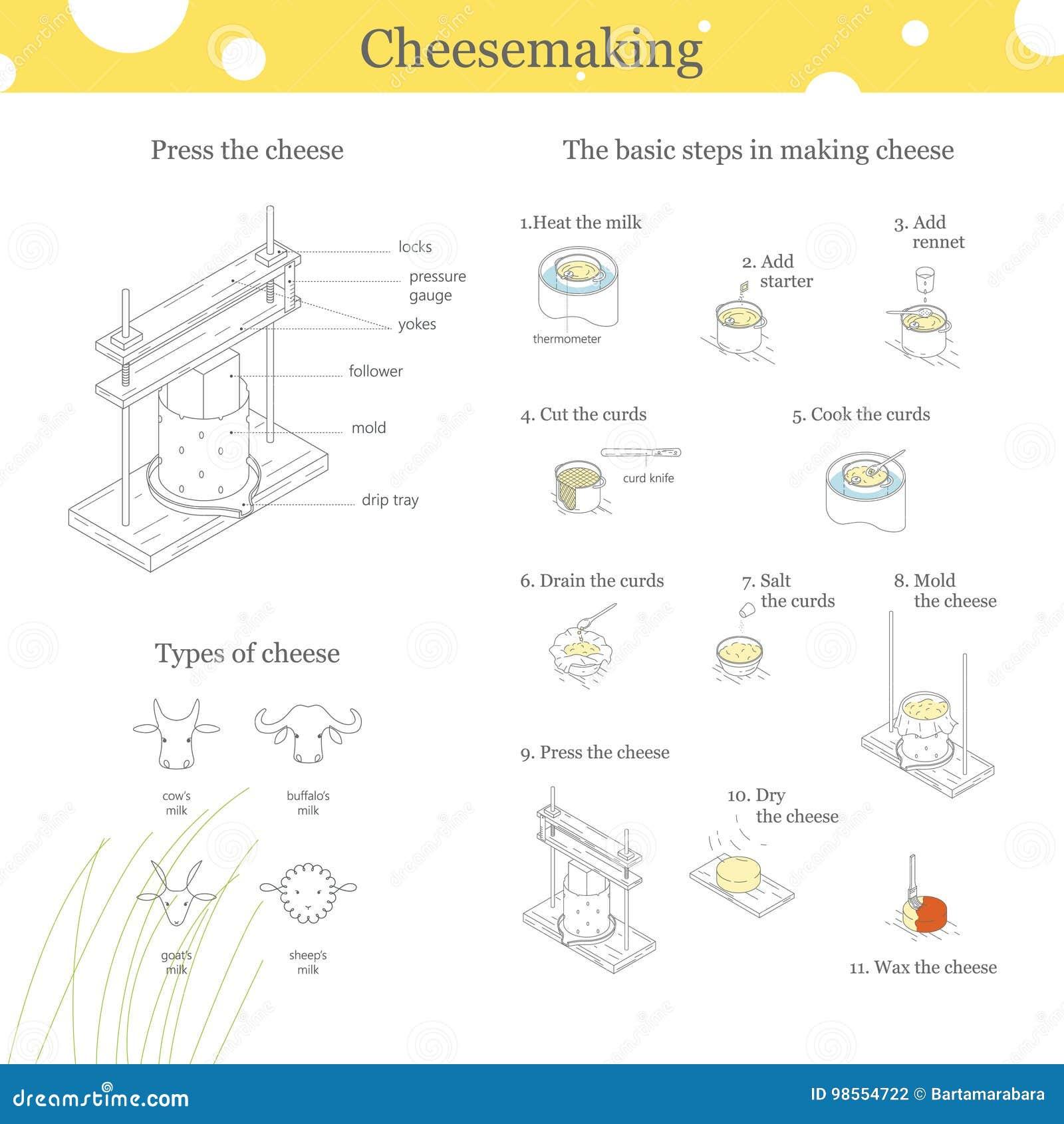 关于乳酪的Infographics