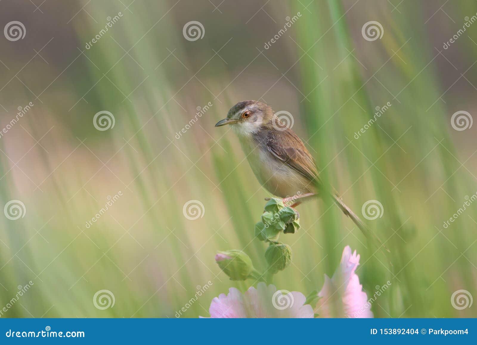 关闭与花的逗人喜爱的鸟本质上