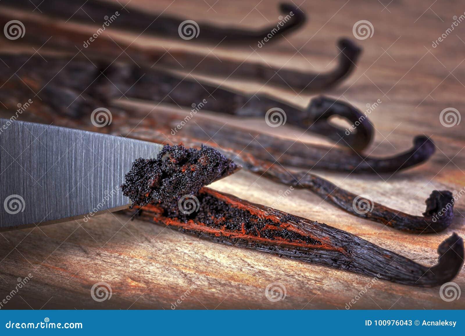 关闭刀子切口香子兰豆种子荚