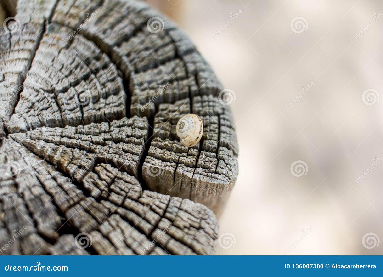 关闭在一根被切开的树干的一只蜗牛