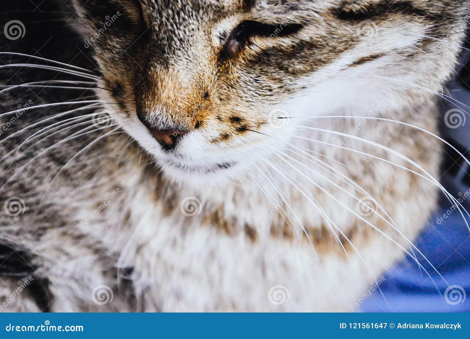 关闭在猫颊须