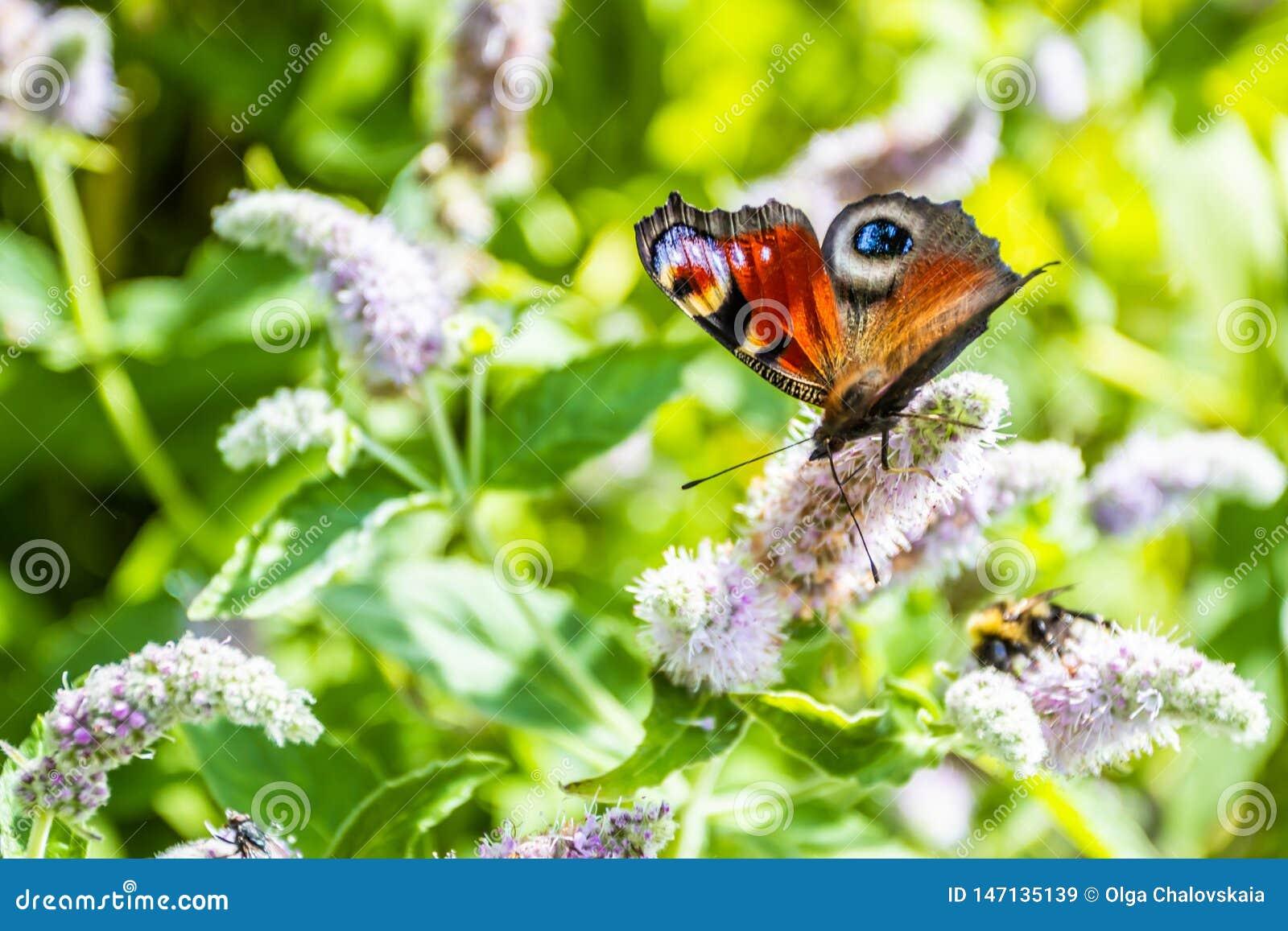 关闭在花-迷离花背景的蝴蝶