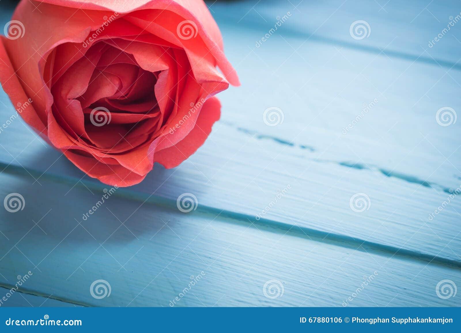 关闭在蓝色木头,葡萄酒定调子的新鲜的玫瑰,有选择性