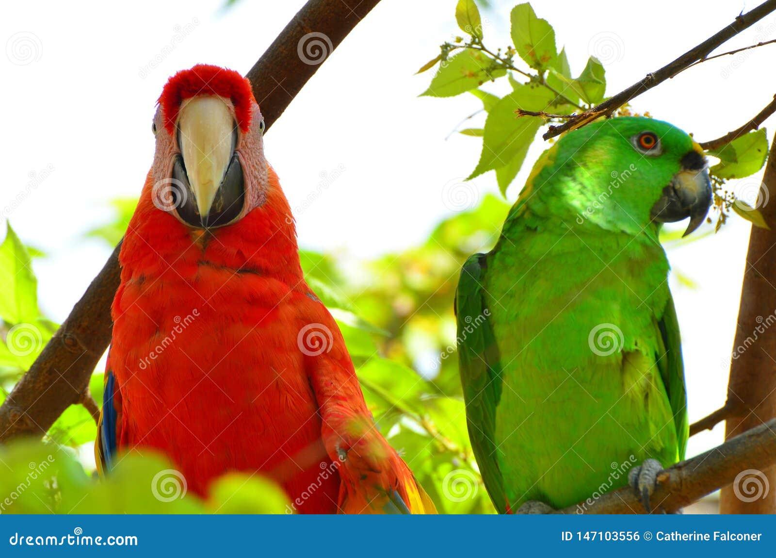 关闭猩红色金刚鹦鹉和绿色鹦鹉