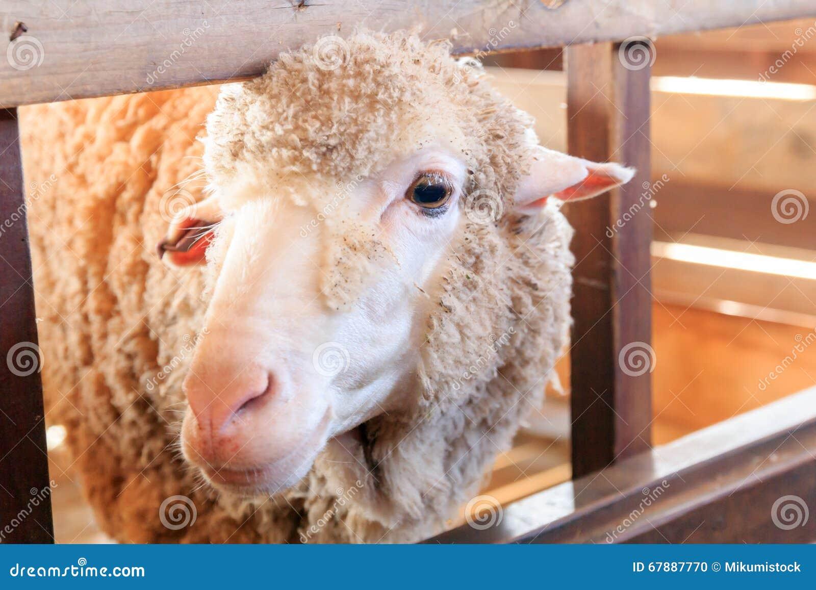 关闭羊魄在自然农场