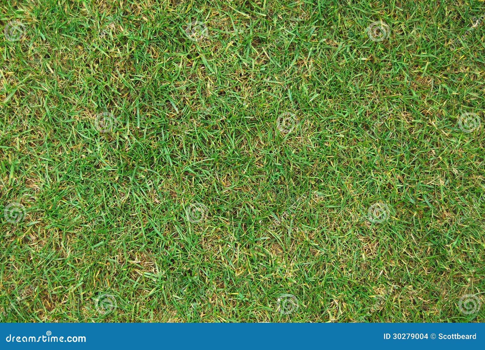 草草坪摘要背景