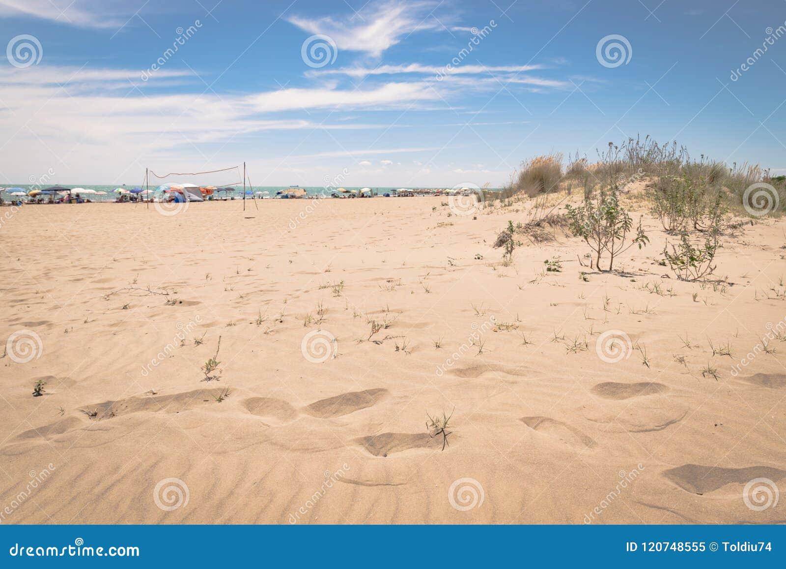典型的地中海植被组成由灌木和灌木n