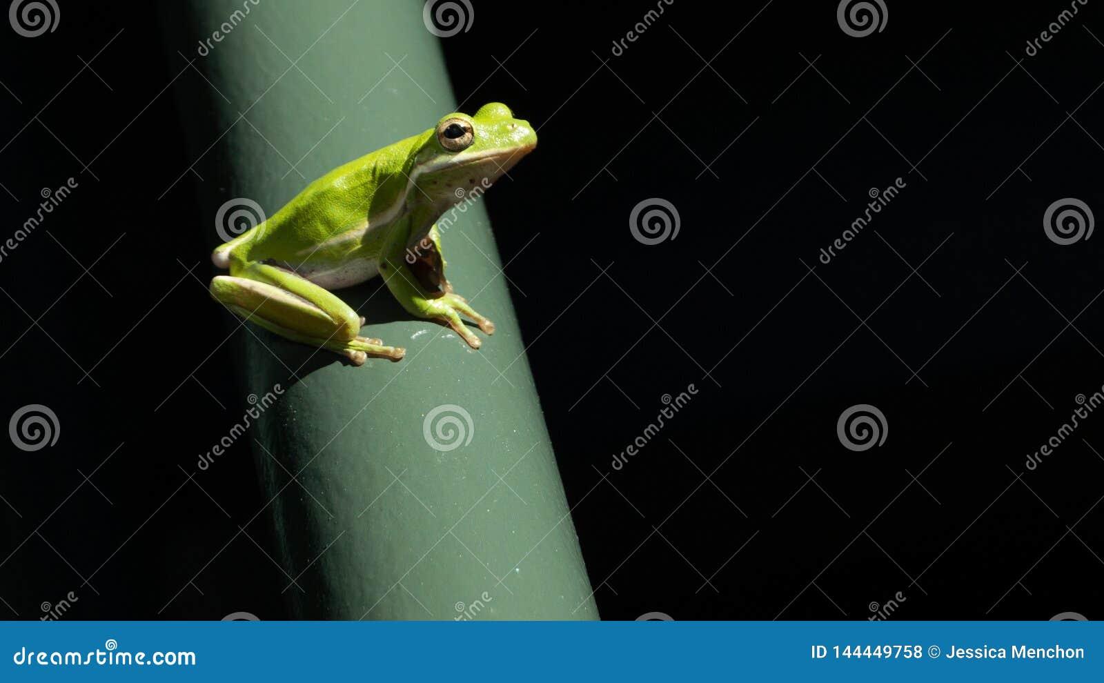 典雅的太阳被亲吻的青蛙在郊区环境里