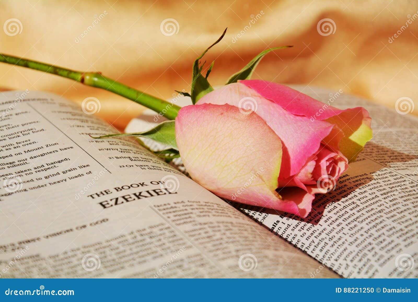 典雅的花,激情的标志