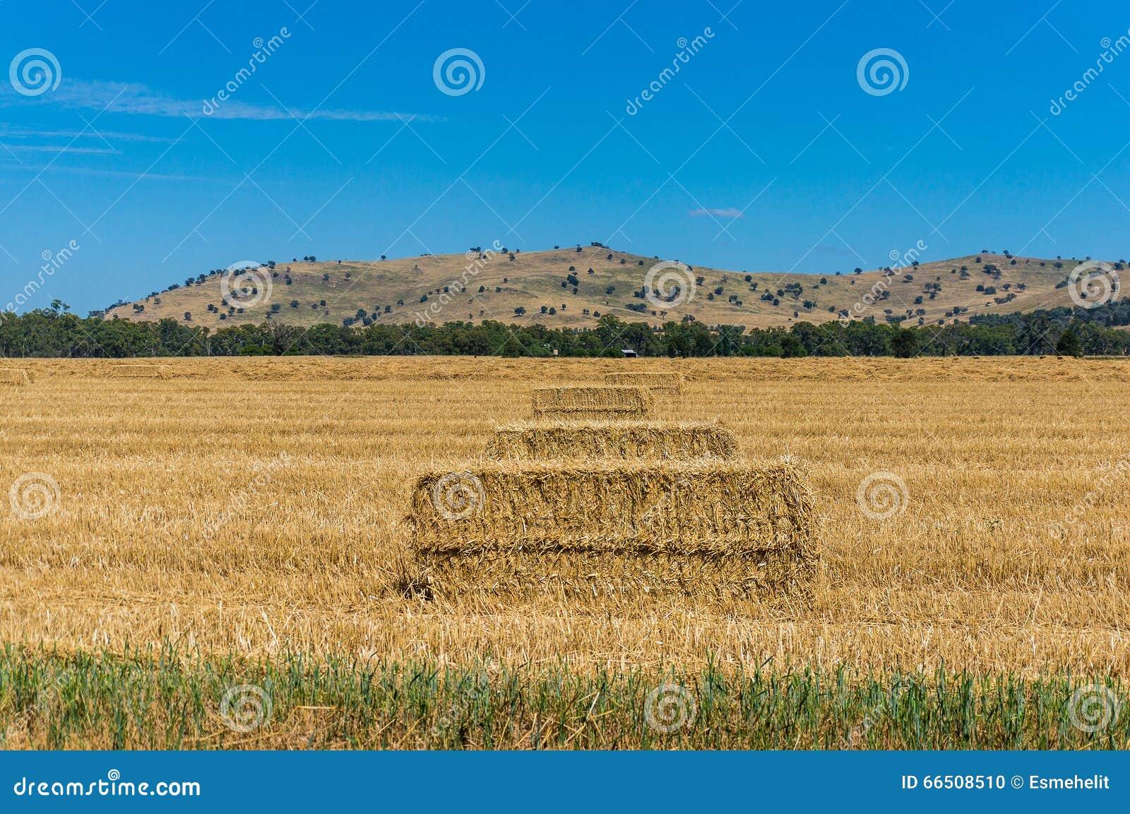 农业横向 一个农村风景的干草堆