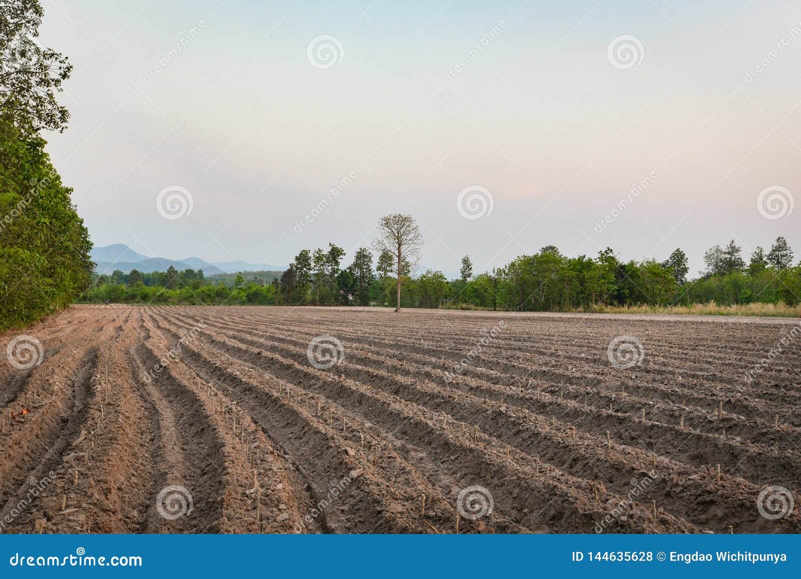 农业犁土壤为开始种植木薯领域农田做准备