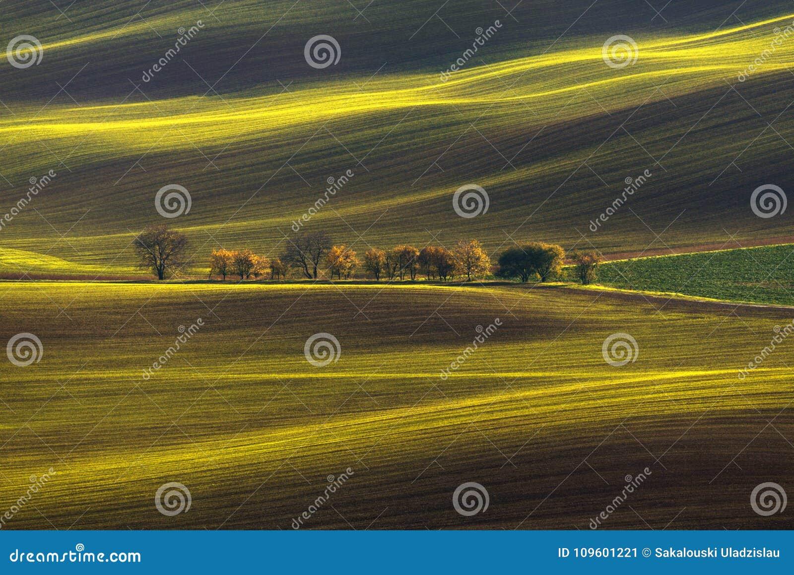 农业辗压春天/秋天风景 自然风景在布朗和黄色颜色 与Beauti的挥动的培养的行领域