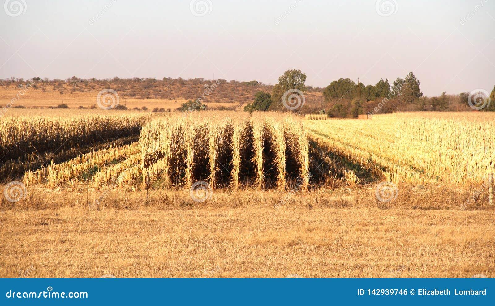 农场在波切夫斯特鲁姆,南非