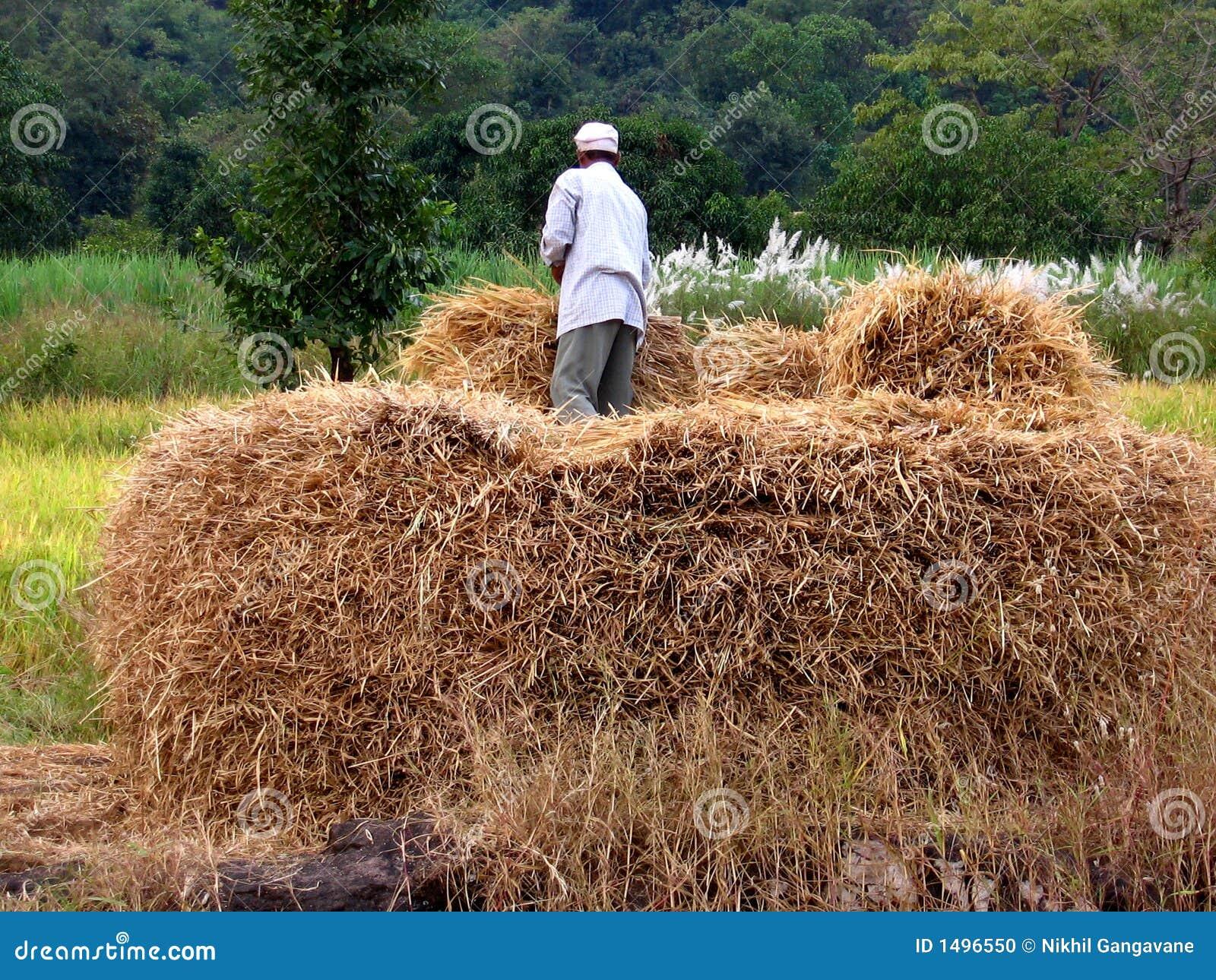 农夫干草堆