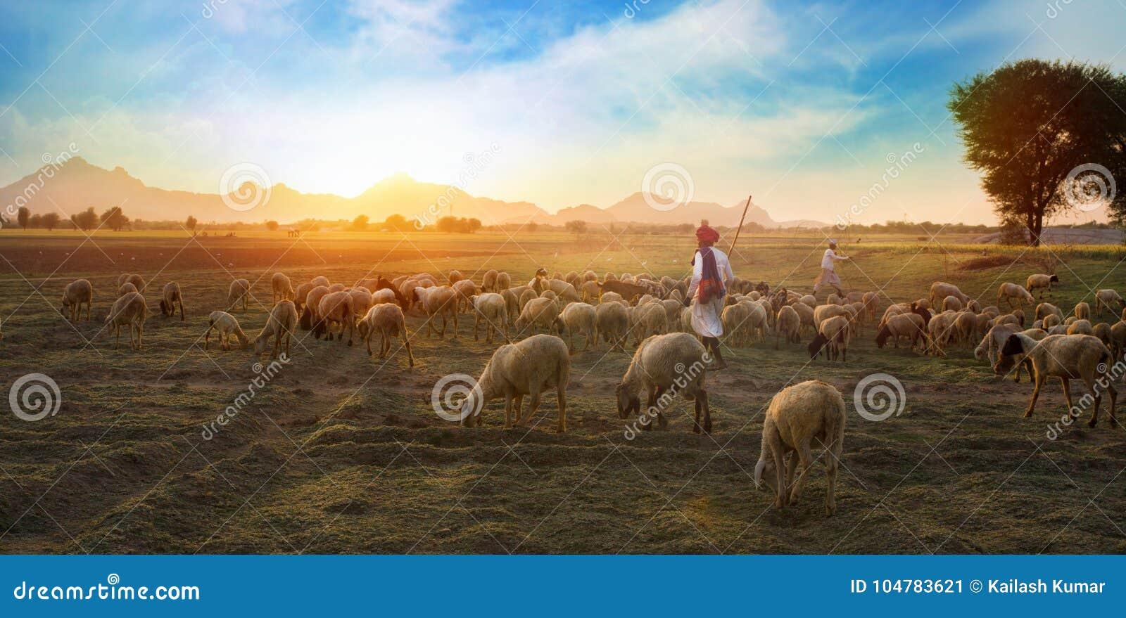 Download 农村成群 编辑类照片. 图片 包括有 敌意, 印度, 背包, 自然, 农夫, 场面, 印第安语, 牧群 - 104783621