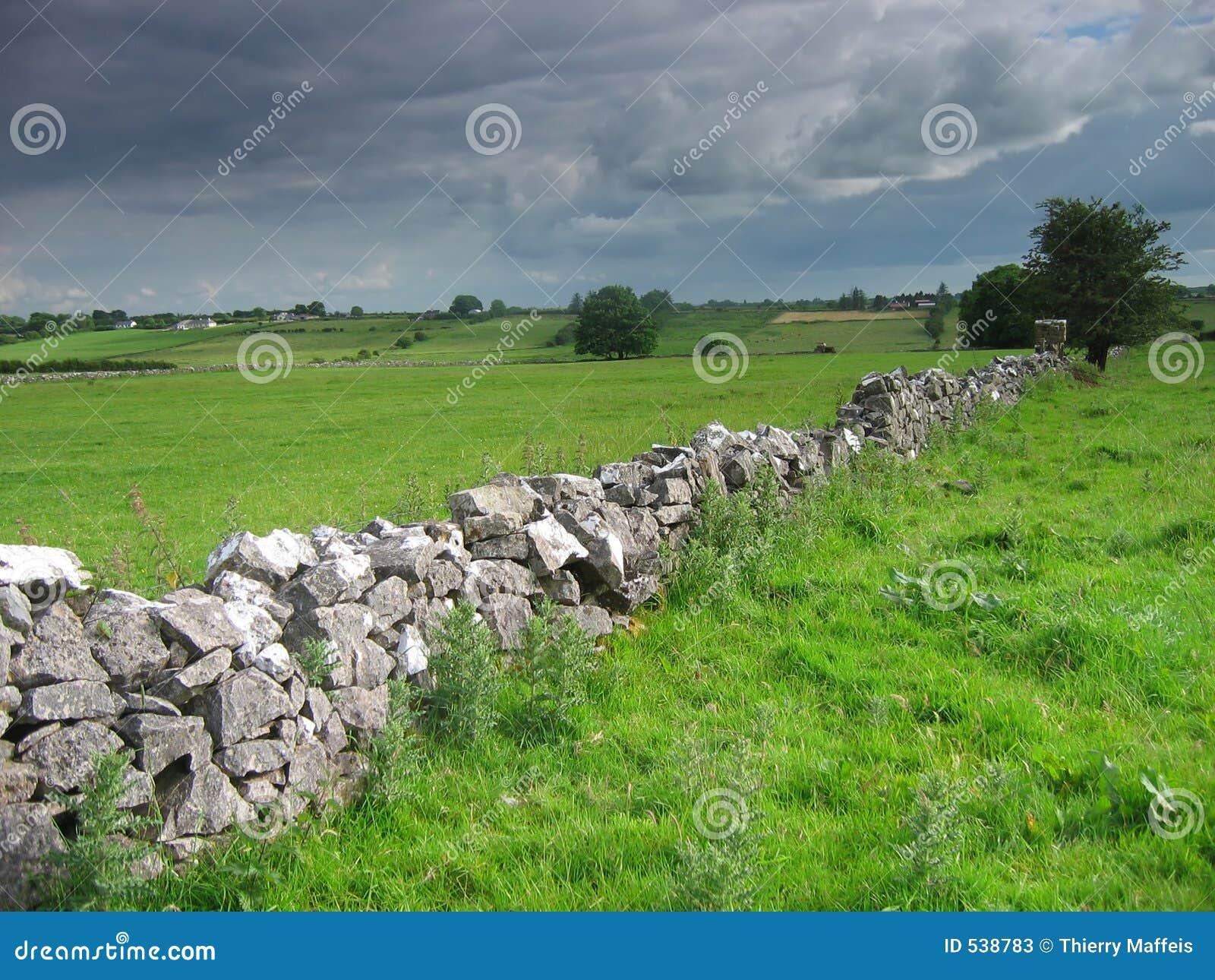 Download 农村的爱尔兰 库存图片. 图片 包括有 庄稼, 牛奶店, 乡下, 问题的, 醉汉, 牛奶, 横向, 肥沃, 农场 - 538783