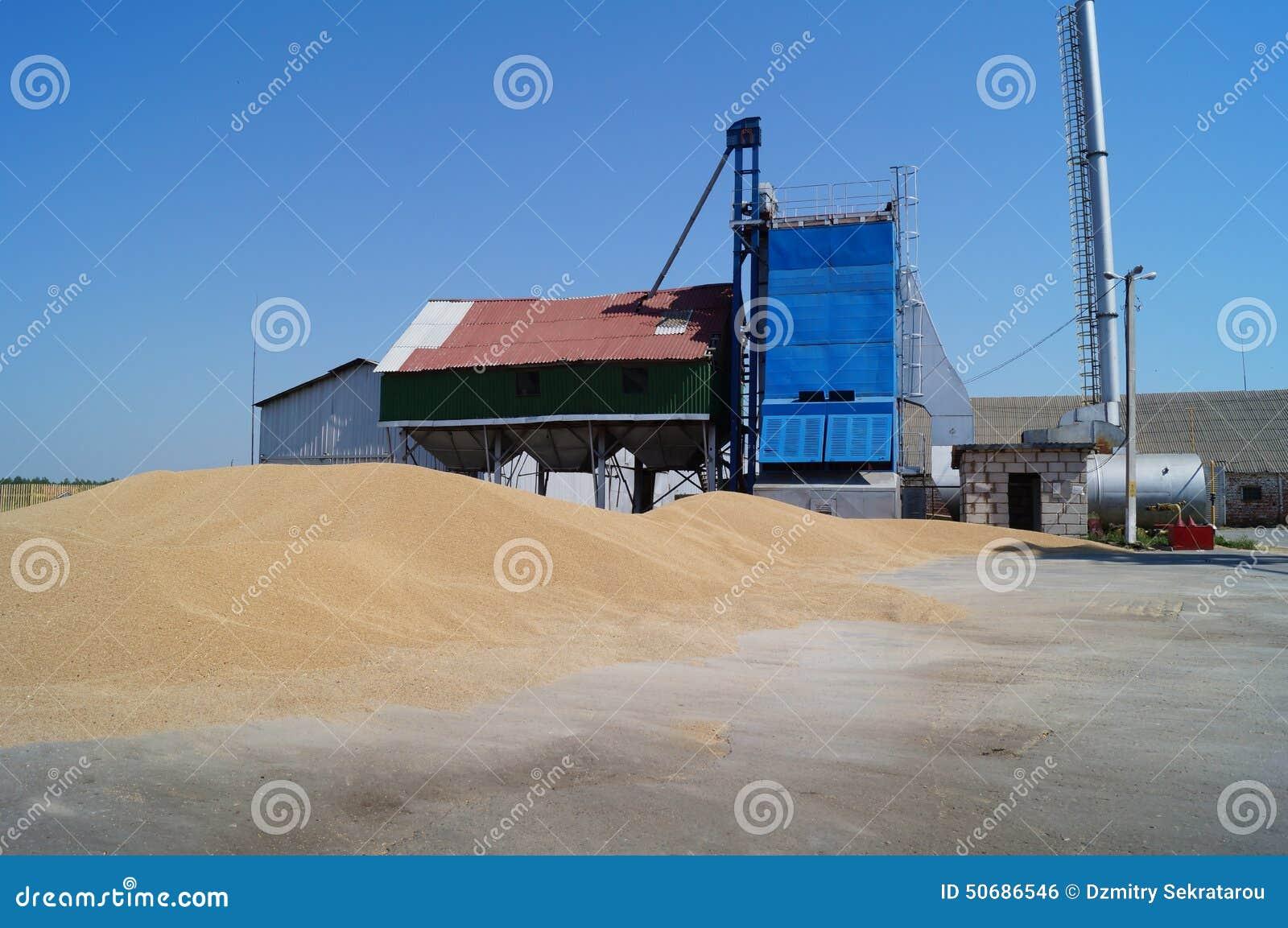 Download 农村的生活 草料驻地和五谷山 库存照片. 图片 包括有 仍然, 操场, 麦子, 站点, 岗位, 烘干, 存贮 - 50686546