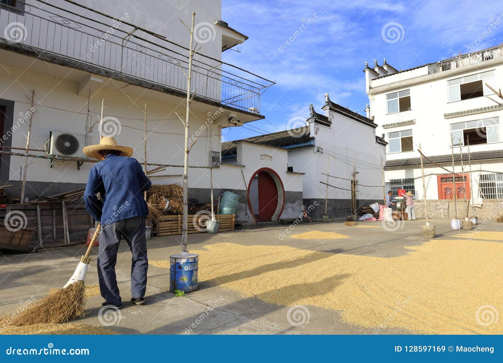 农村老农夫清洁为干燥五谷,多孔黏土rgb研了