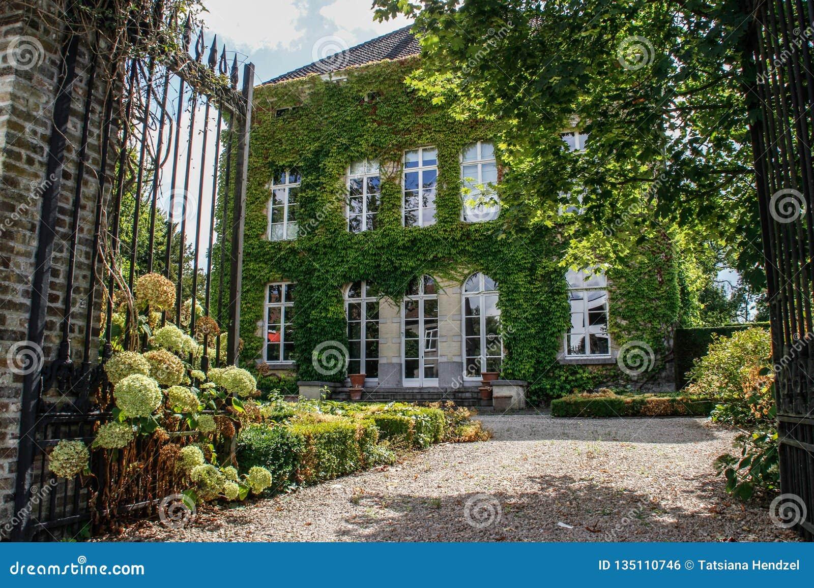 农舍在比利时纠缠了与鲜绿色的常春藤和入口