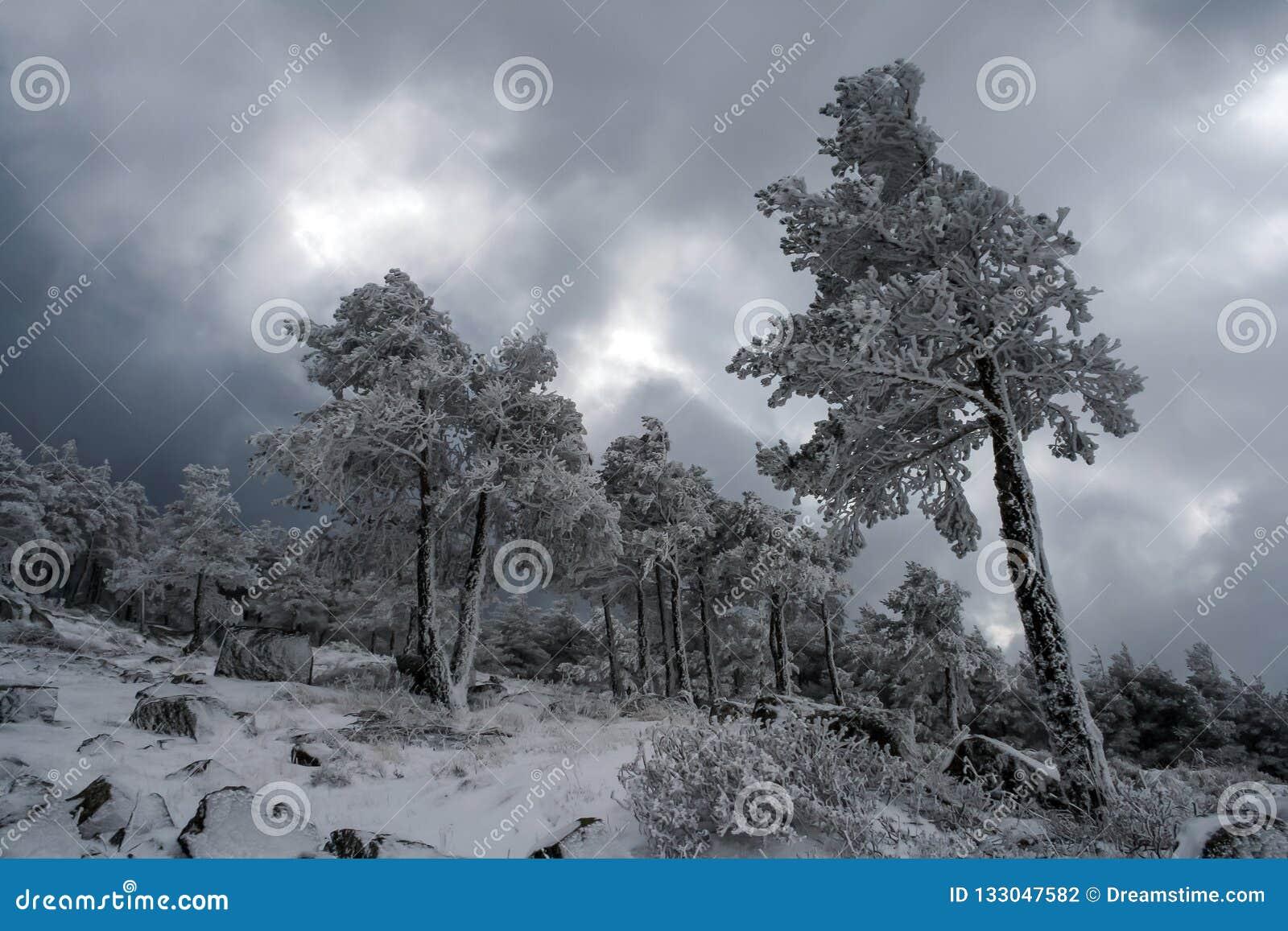 冬天印刷品在马德里山脉