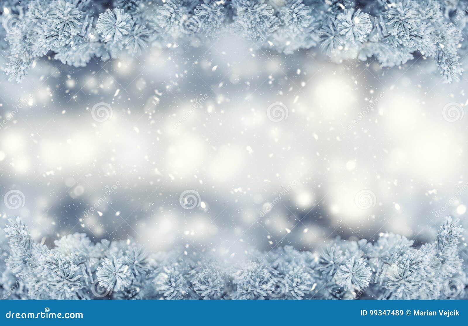 冬天和圣诞节边界 杉树分支包括在多雪的大气的霜