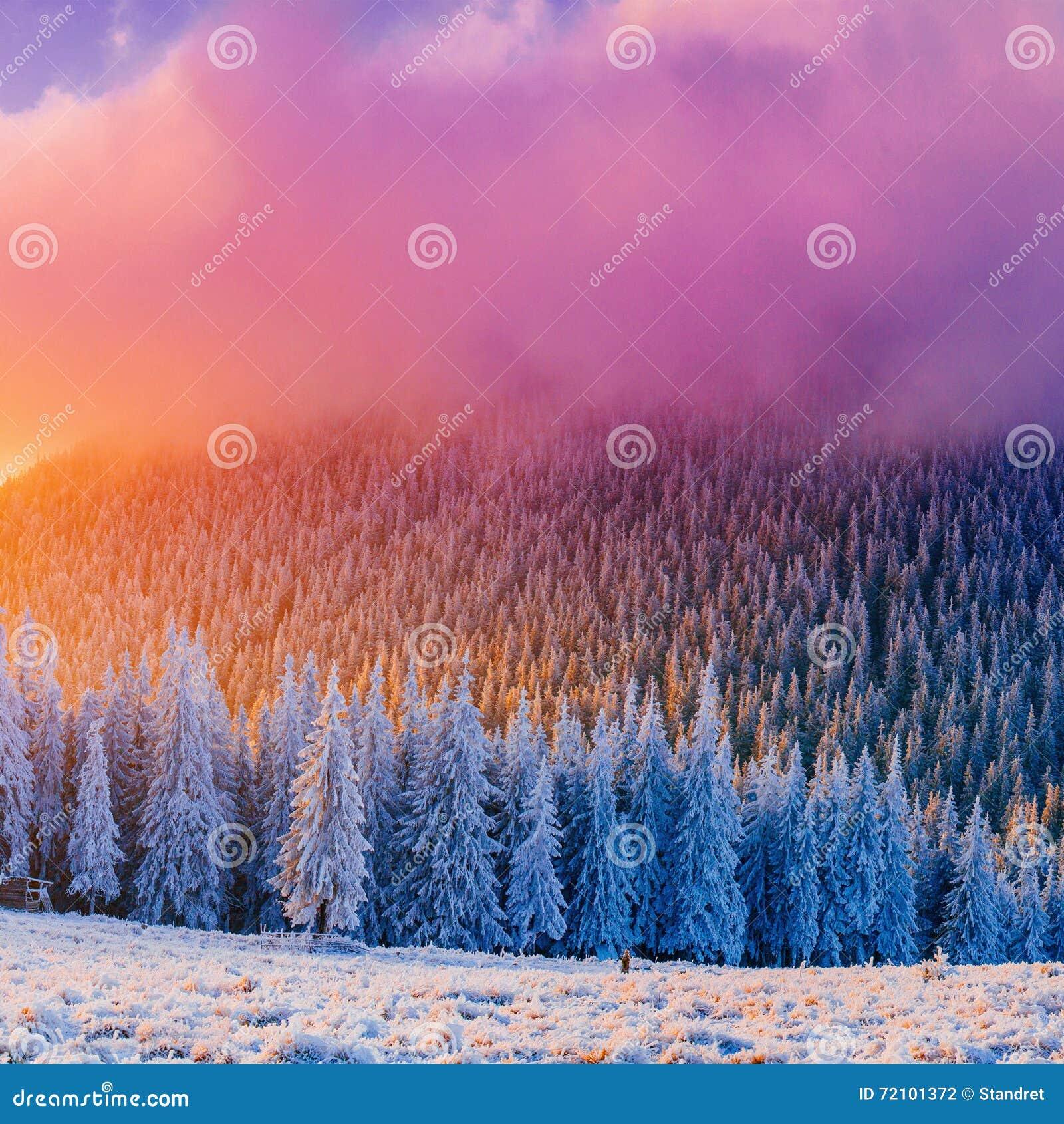 冬天在喀尔巴阡山脉的霜的风景树,乌克兰,欧洲