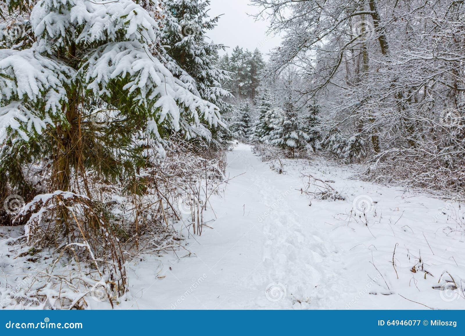 在欧洲森林美好的风景的冬天与积雪的树,分支和地面.图片图片