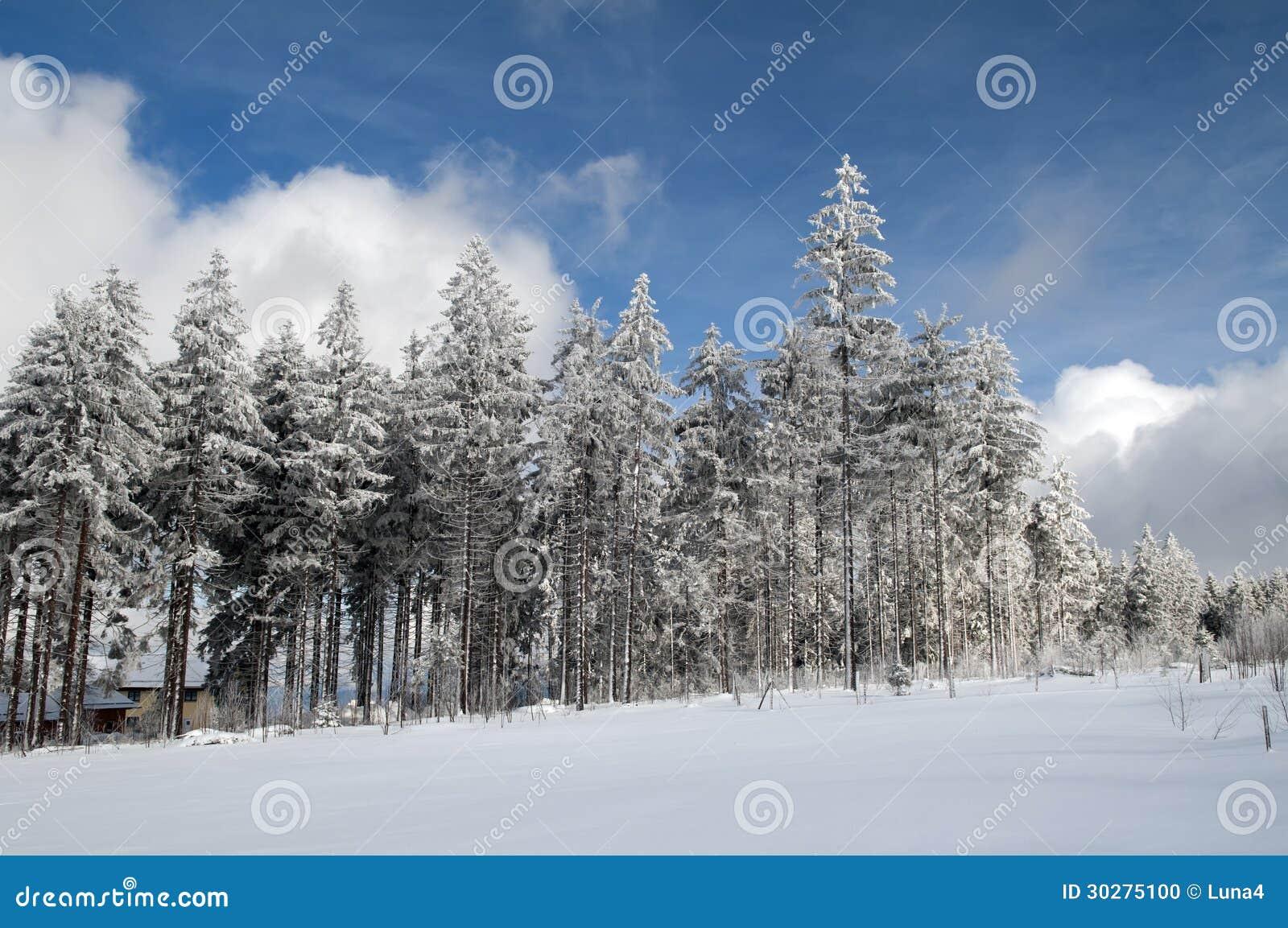 晴朗的冬天森林